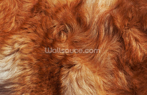 Highland Cattle Print Wallpaper Wall Murals