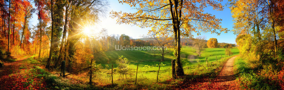 Autumn Pathways Wallpaper Wall Murals