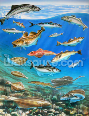 Sea Fish Wallpaper Wall Murals