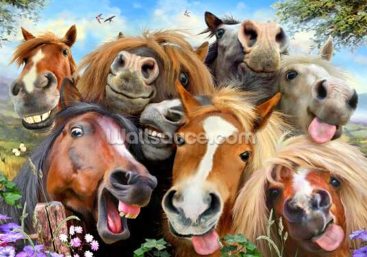 Horses Selfie Wallpaper Wall Murals
