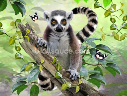 Ringtailed Lemur Selfie Wallpaper Wall Murals