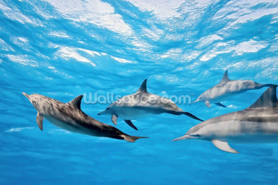 Dolphin Pod Wallpaper Wall Murals