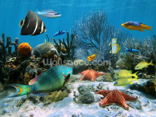 Coral Reef Wallpaper Wall Murals