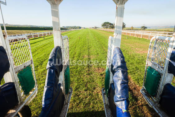 Horse Racing Start Gate Training Wallpaper Wall Murals