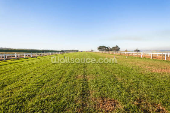 Horse Racing Training Track Wallpaper Wall Murals