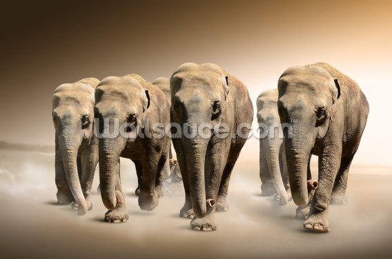 Herd of Elephants Wallpaper Wall Murals