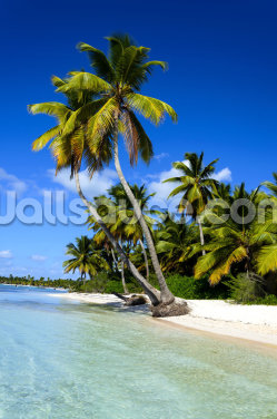 Dominican Beach Palm Tree Wallpaper Wall Murals