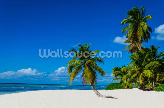 Lone Palm Dominican Republic Wallpaper Wall Murals
