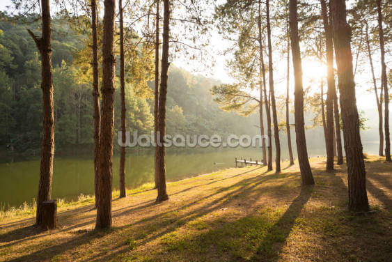 A New Day in the Forest Wallpaper Wall Murals