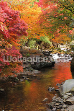 Autumn Colours, Japan Wallpaper Wall Murals