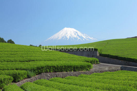 Snow Capped Mount Fuji Wallpaper Wall Murals