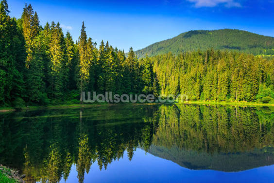 Nature's Green and Blue Wallpaper Wall Murals