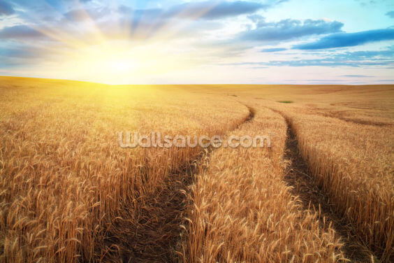 Meadow of Wheat Wallpaper Wall Murals