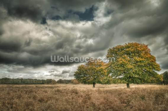 Autumn Trees Wallpaper Wall Murals