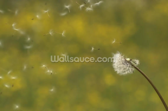 Dandelion in the Wind - Colour Wallpaper Wall Murals