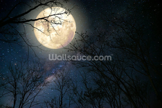 Woodland Moon Wallpaper Wall Murals