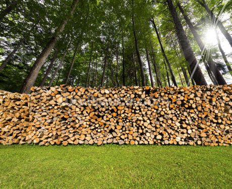 Pile of Chopped Firewood in the Woods Wallpaper Wall Murals