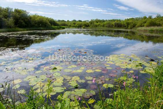 Lily Pad Loch Wallpaper Wall Murals