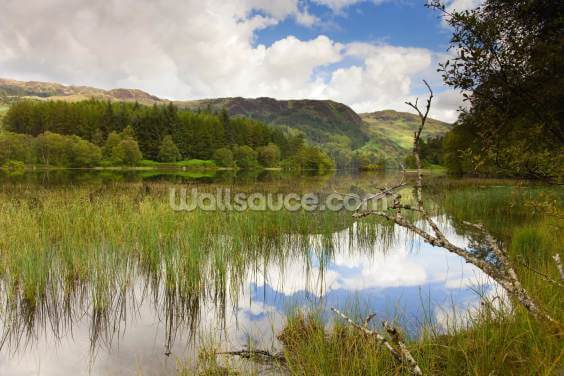Loch Trool Wallpaper Wall Murals