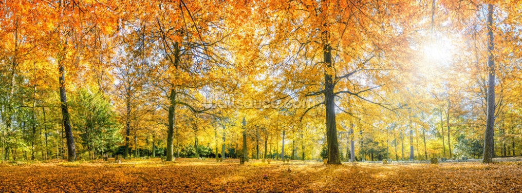 Herbstwald Panorama Wallpaper Wall Murals