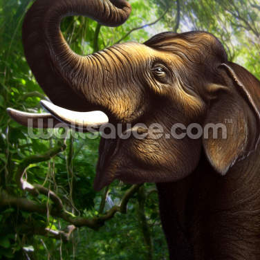 Indian Elephant Jungle Wallpaper Wall Murals