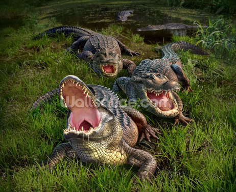 Alligators Wallpaper Wall Murals