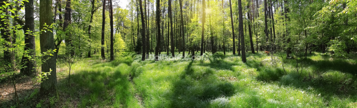 Green Forest Floor Wallpaper Wall Murals