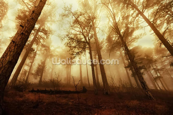 Pine Forest in the Mist Wallpaper Wall Murals
