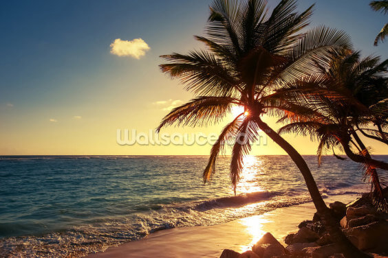 Palm Tree on the Tropical Beach Wallpaper Wall Murals