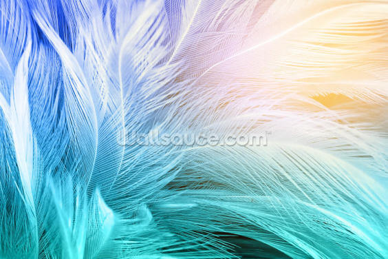 Pastel and Light Feathers Wallpaper Wall Murals