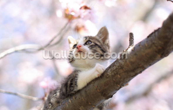 Kitten with Cherry Blossom Wallpaper Wall Murals