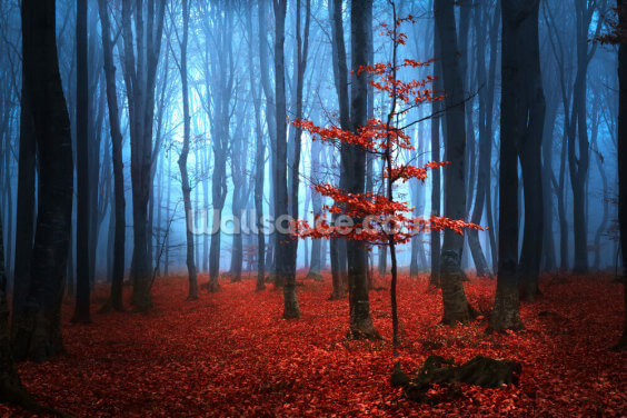 Autumn Red and Blue Wallpaper Wall Murals