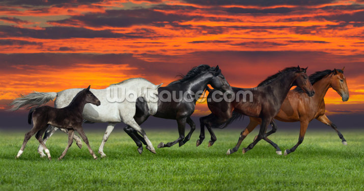 Sunset Horses Wallpaper Wall Murals