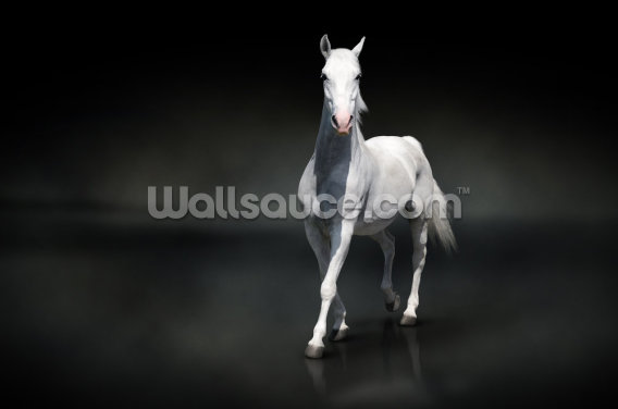 White Horse on Black Wallpaper Wall Murals