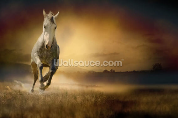 White Horse at Gallop Wallpaper Wall Murals
