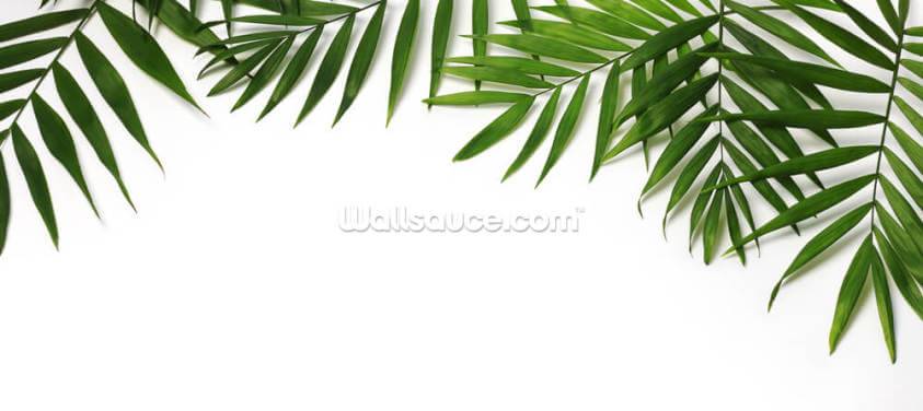 Beautiful Palm Leaves Wallpaper Wall Murals