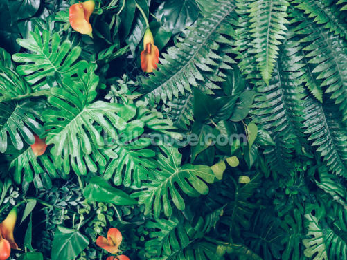 Exotic Jungle Wallpaper Wallpaper Wall Murals