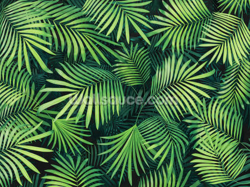 Leaves of Palm Tree Wallpaper Wall Murals