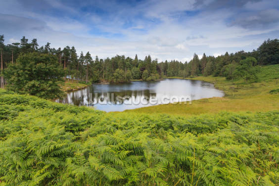 Tarn Hows Lake Wallpaper Wall Murals