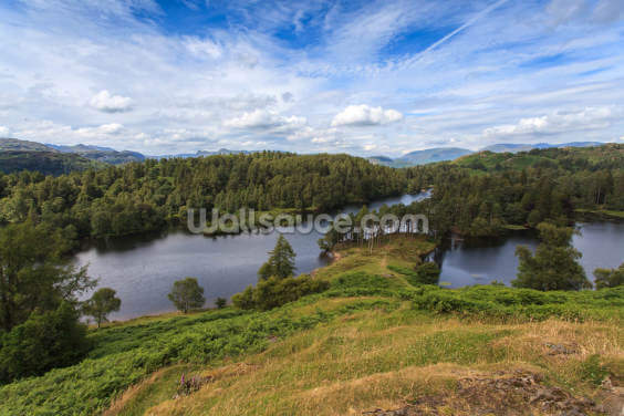 Tarn Hows Views Wallpaper Wall Murals