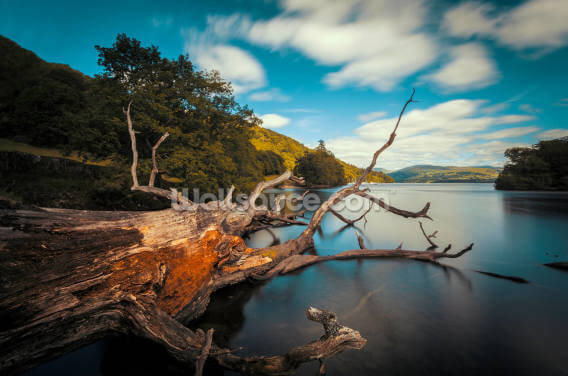 Fallen Tree Lake Windermere Wallpaper Wall Murals
