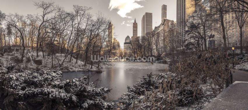 Winter Dawn in Central Park Wallpaper Wall Murals