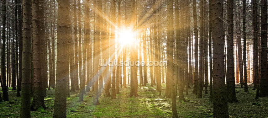 Sun in the Forest Wallpaper Wall Murals