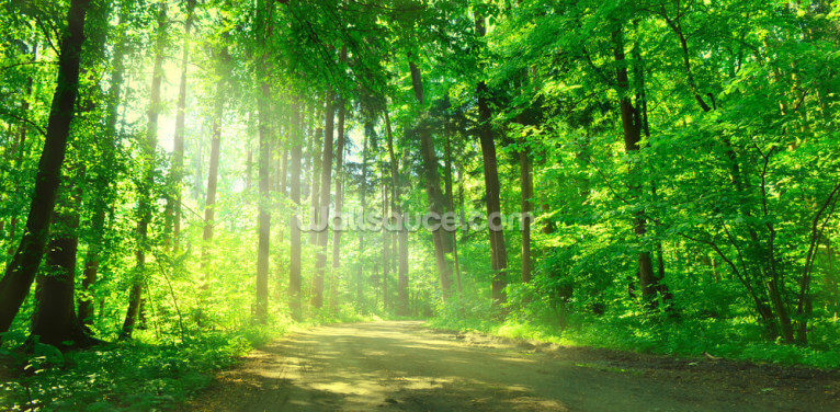 Forest Path in Sunshine Wallpaper Wall Murals