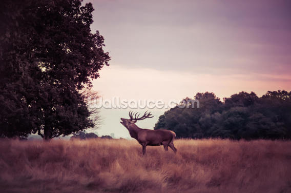 Stag at Sunrise Wallpaper Wall Murals