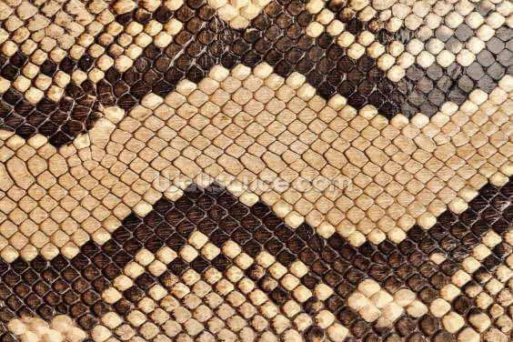 Brown Snake Skin Print Wallpaper Wall Murals
