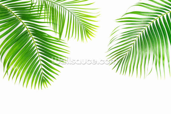 Green Palm Leaves Wallpaper Wall Murals