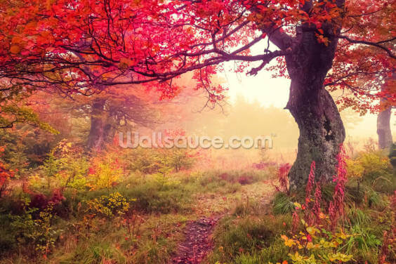Autumn Forest Meadow Wallpaper Wall Murals
