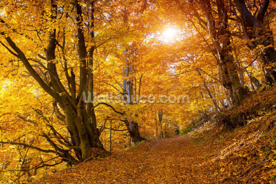 Autumn Leaves on Trees Wallpaper Wall Murals