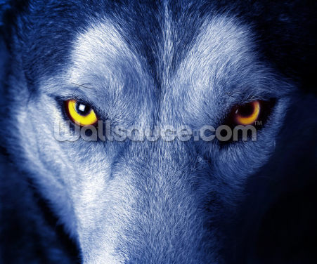 Blue Wolf Wallpaper Wall Murals